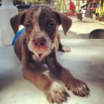 Why Shelter Dogs Are The Best