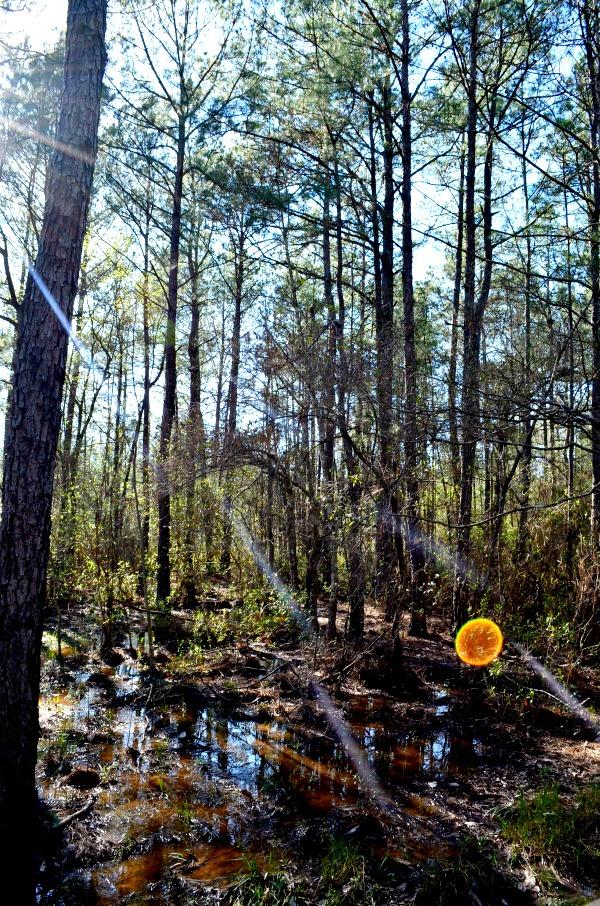 sundew trail