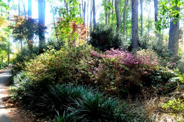 ruby m. mize azalea garden