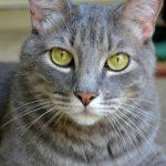 10 secret facts about cats