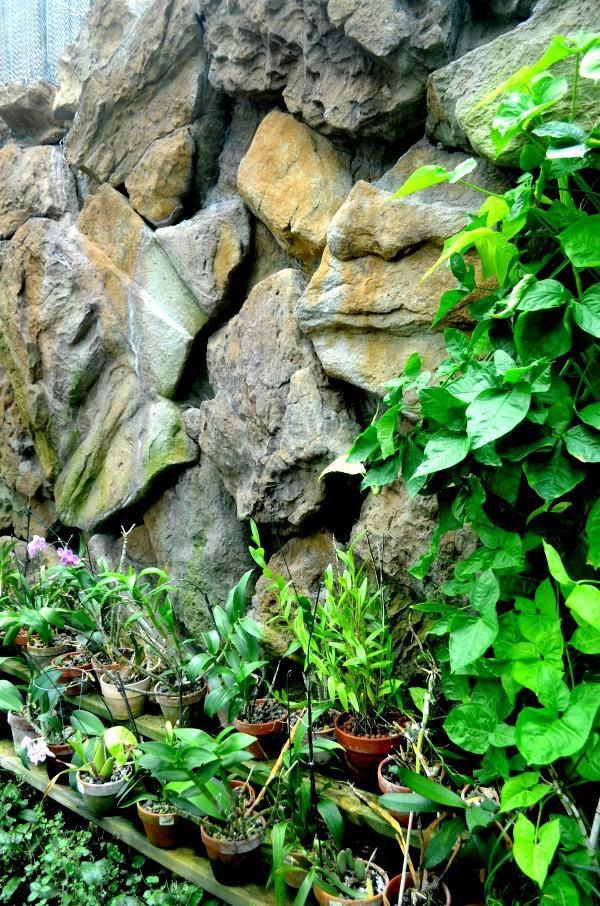 warren loose conservatory