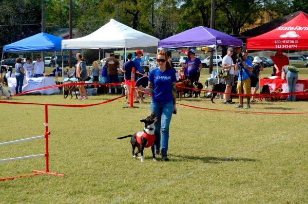 pit bull awareness day festival