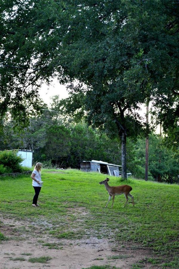 feeding deer