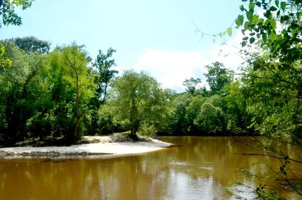 roy e. larsen sandyland sanctuary
