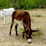 yaqui animal rescue